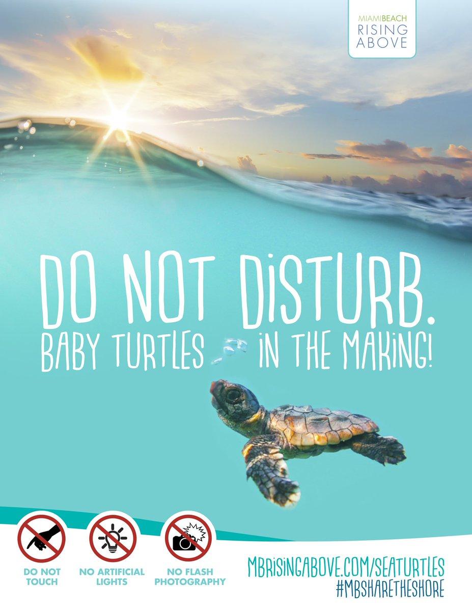 City of Miami Beach is Ready for Sea Turtle Nesting Season